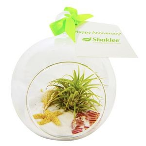 Air Plant White Sand Terrarium Kit